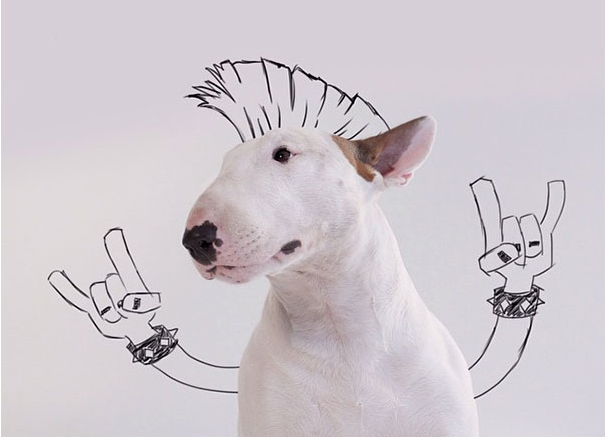 Rafael Mantesso Dog